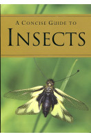 A Concise Guide to Insects